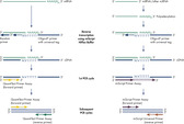 Simultaneous conversion of all RNA species into cDNA in miScript HiFlex Buffer