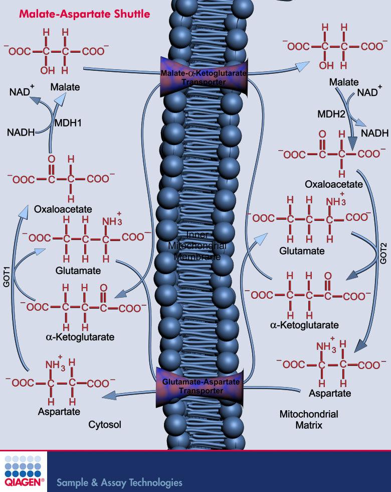 qiagen - geneglobe pathways