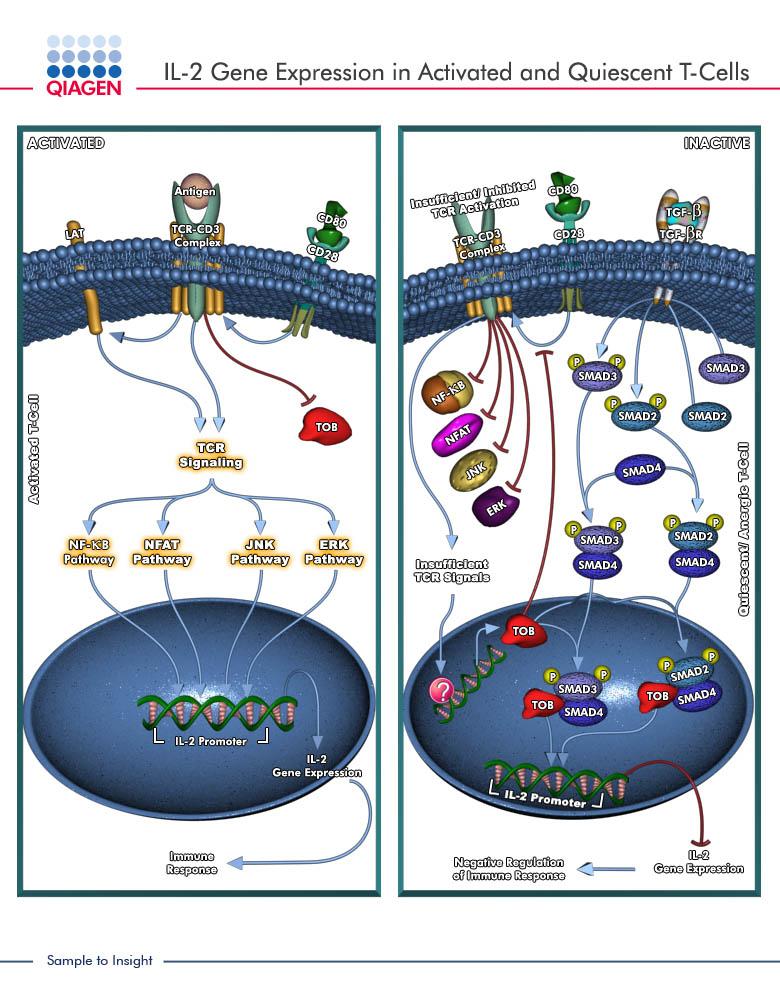 Quiescent Cells