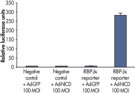 Assessing overexpression phenotypes.