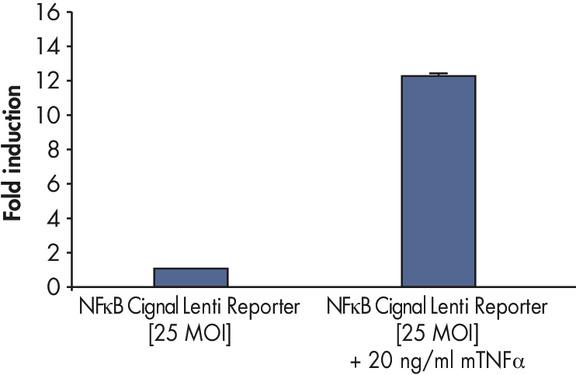<p>Measurement of NFκB pathway activity.</p>