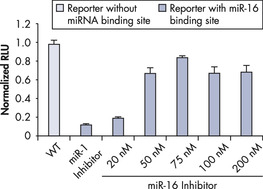 miScript miRNA Inhibitor counteracts miRNA-induced silencing.