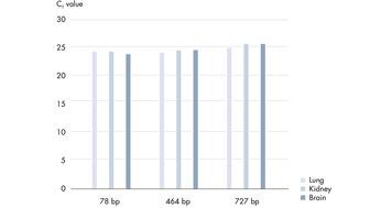 从FFPE组织样品中纯化的DNA的PCR分析。