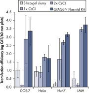 Transfection efficiency versus plasmid purification method.