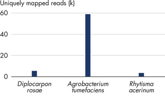 Successful identification of plant pathogens by NGS.