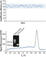 Uniform amplification efficiency and specific PCR detection.