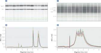 Streamlined RNA analysis using the QIAxcel Advanced System.