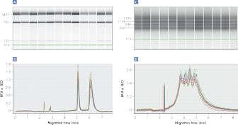 Streamlined RNA analysis using the QIAxcel Advanced System.