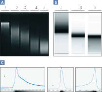 Assessment of DNA degraded by sonication.