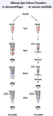 QIAamp spin column procedure.