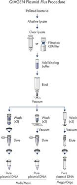 QIAGEN Plasmid Plus procedure.