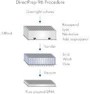 DirectPrep 96 procedure.