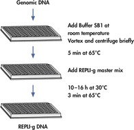 REPLI-g screening procedure.