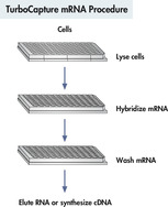 TurboCapture mRNA procedure.