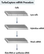 TurboCapture mRNA procedure.