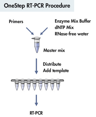 OneStep RT-PCR procedure.