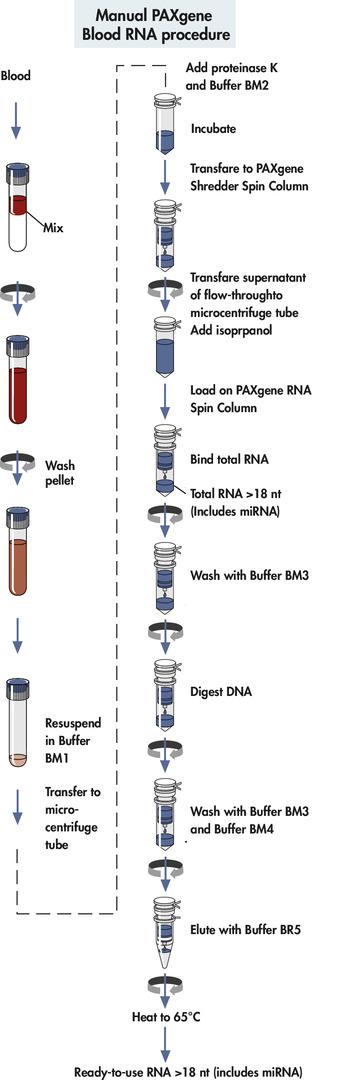 Manual PAXgene Blood RNA procedure.