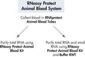 RNeasy Protect Animal Blood flowchart.
