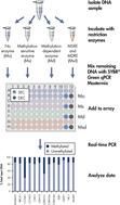 EpiTect Methyl II PCR Array procedure.
