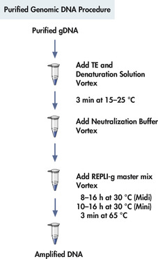 <p>REPLI-g Mini and Midi procedure.</p>
