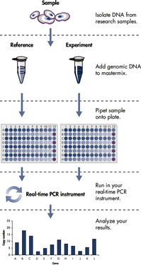 <p>Workflow for qBiomarker Copy Number PCR Arrays.</p>