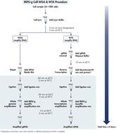 REPLI-g Cell WGA & WTA Kit procedure.