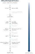 REPLI-g WTA Single Cell Kit procedure.