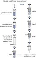 整合了宿主DNA的纯化程序。