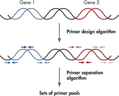 Multiplex PCR-enabled target enrichment of genomic regions of interest