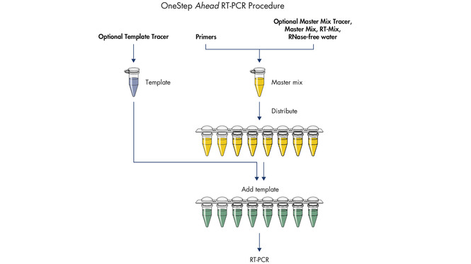 OneStep Ahead RT-PCR procedure