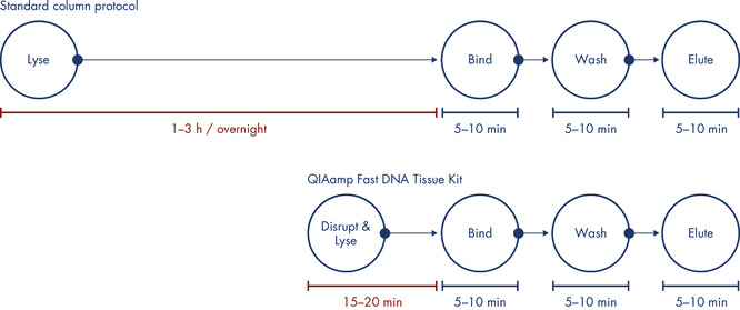 Time is saved with the QIAamp Fast DNA Tissue Kit compared to standard methods