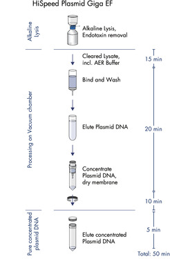 HighSpeed Plasmid Giga EF procedure