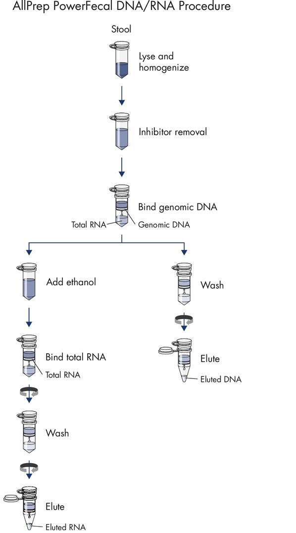 The AllPrep PowerFecal DNA/RNA Kit procedure.