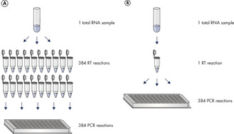 The benefit of a universal reverse transcription step.