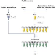 PCR procedure.