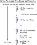 REPLI-g Advanced DNA Single Cell workflow.