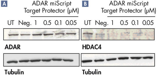 miScript Target Protectors are specific for the gene of interest.