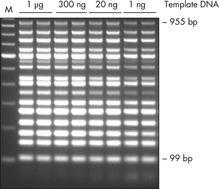 Efficient 16plex PCR.
