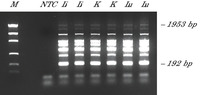 Multiplex PCR of 8 targets.