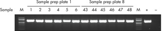 Reproducible performance in sensitive PCR analysis.