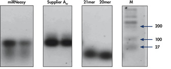 Effective enrichment of small RNA.