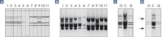 Accurate, high-throughput genotyping of bacteria.