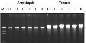 High-quality DNA from plant tissues.