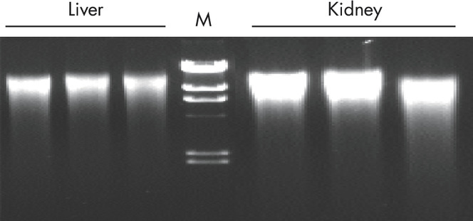 Reproducible purification of high-quality genomic DNA.