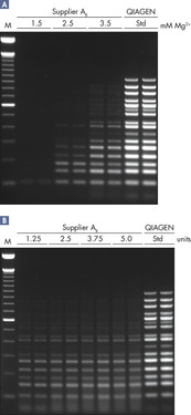 Successful 16-plex PCR.