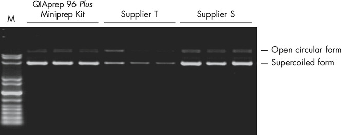 Superior plasmid DNA quality.