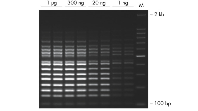 Successful 16-plex PCR over a wide range of template amounts.