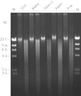 Pure DNA (20–25 kb) for restriction analysis.