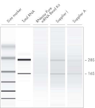 The GeneRead Pure mRNA Kit outperforms mRNA purification kits from other suppliers.