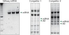 Adapter dimers (AD) and contaminating RNAs steal your reads during miRNA sequencing experiments